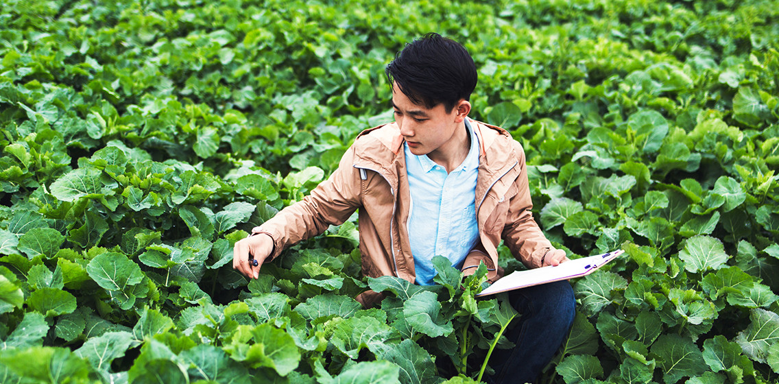 Farmer crouching in crop field with clipboard
