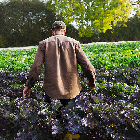Farmer walking through a field full of waist-high growing crops