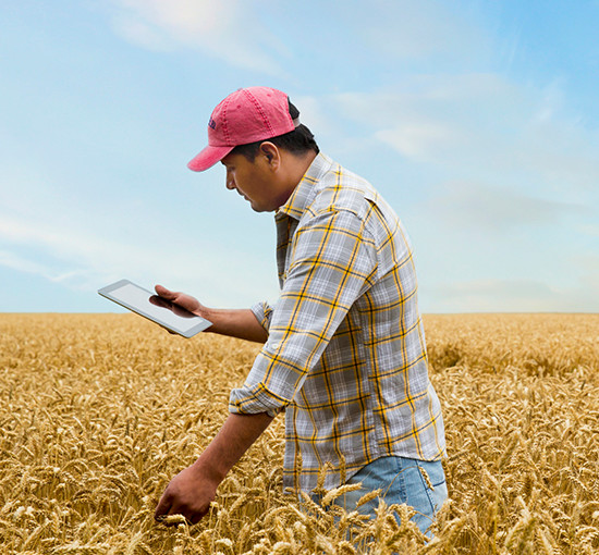 Hispanic farmer with digital tablet in a wheat field